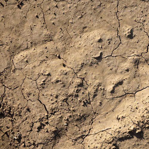 Parched And Cracked Earth Illustrative