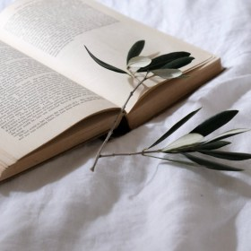 Book and olive leaf, the art of slow learning