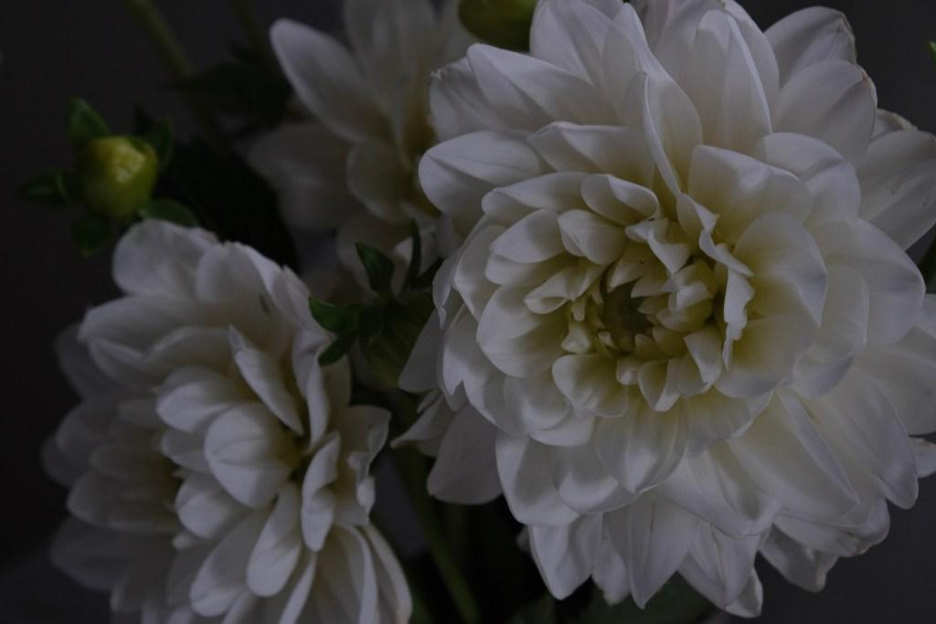 Flowers, Dahlias, Simple living, Slow Living, Florists, Marmoset Found