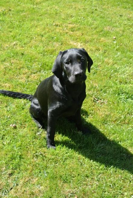 milly Brimford Dog