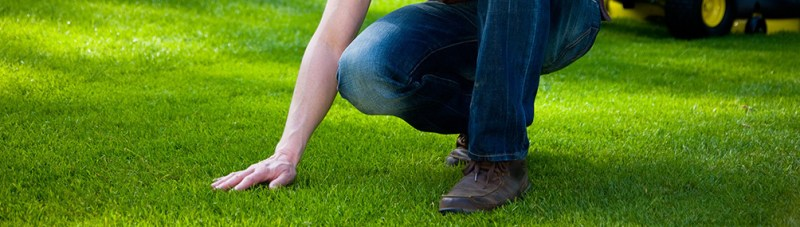Summertime Grass - Summertime Lawn Survival: How to Maintain your Grass this Summer