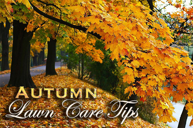 Autumn Lawn Care Tips - Autumn Lawn Care Tips – Preparing for Spring Success