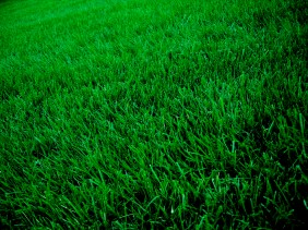 beautiful lawn - New Year, New Lawn: Must-Have Equipment for Lawn Improvement