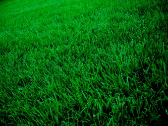 beautiful lawn - Fall is the Time to Core Aerate & Overseed
