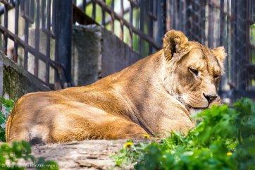 zoo-chisinau-2015-4