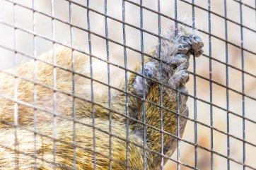 zoo-chisinau-2015-52