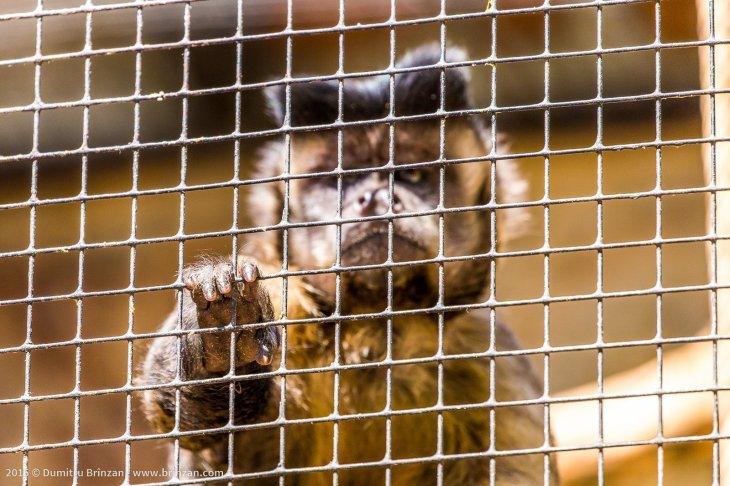 zoo-chisinau-2015-56