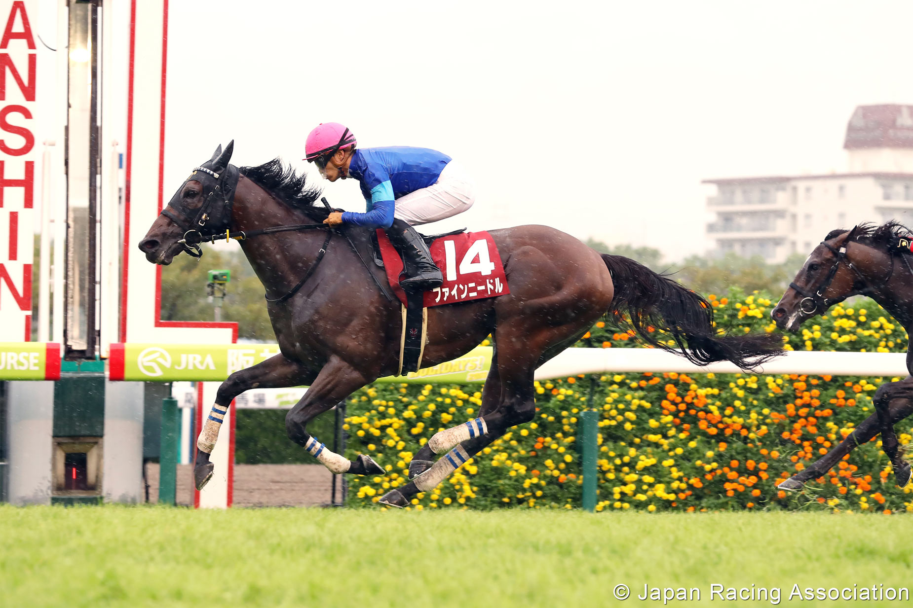 Japan S Fine Needle Might Use Bc Turf Sprint Ticket From