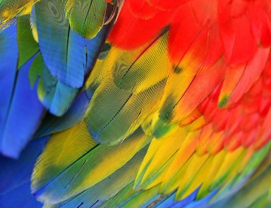 abstract coloured feathers