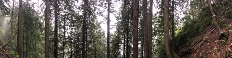 grousegrail_trees