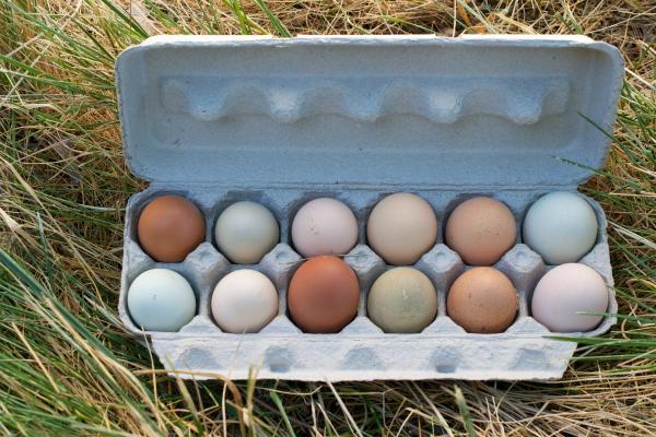 Pastured Organic Eggs (1 dozen)