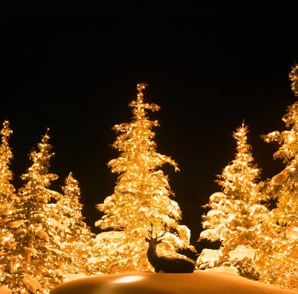 Northern Lights California
