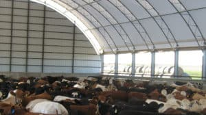 Agriculture Buildings - Beef Cattle Barn