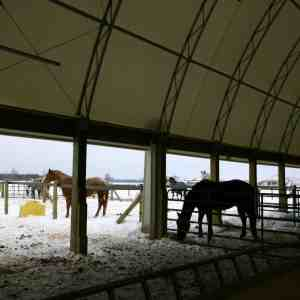 Horse Barn with Run in