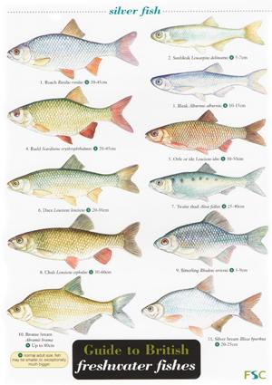 OP110-Fish