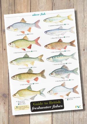 OP110b-Fish