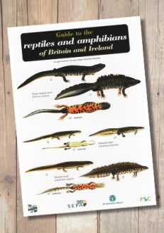 OP55b-ReptilesAmphibians
