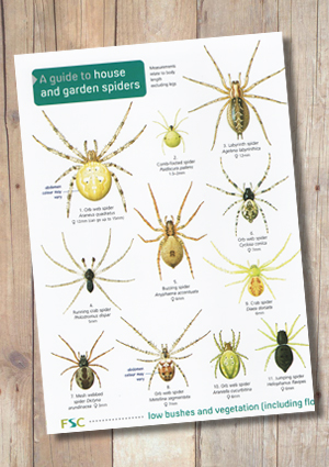OP69-Spiders