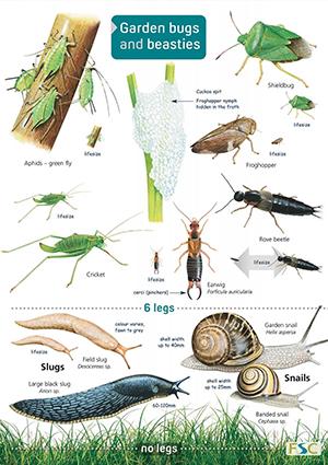 Bugs and Beasties