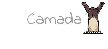 Camada Y