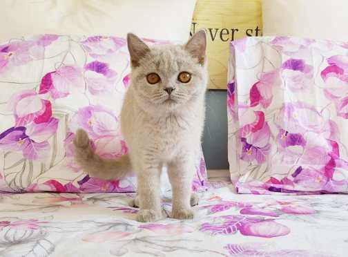 Liva-cat-Freya-RU