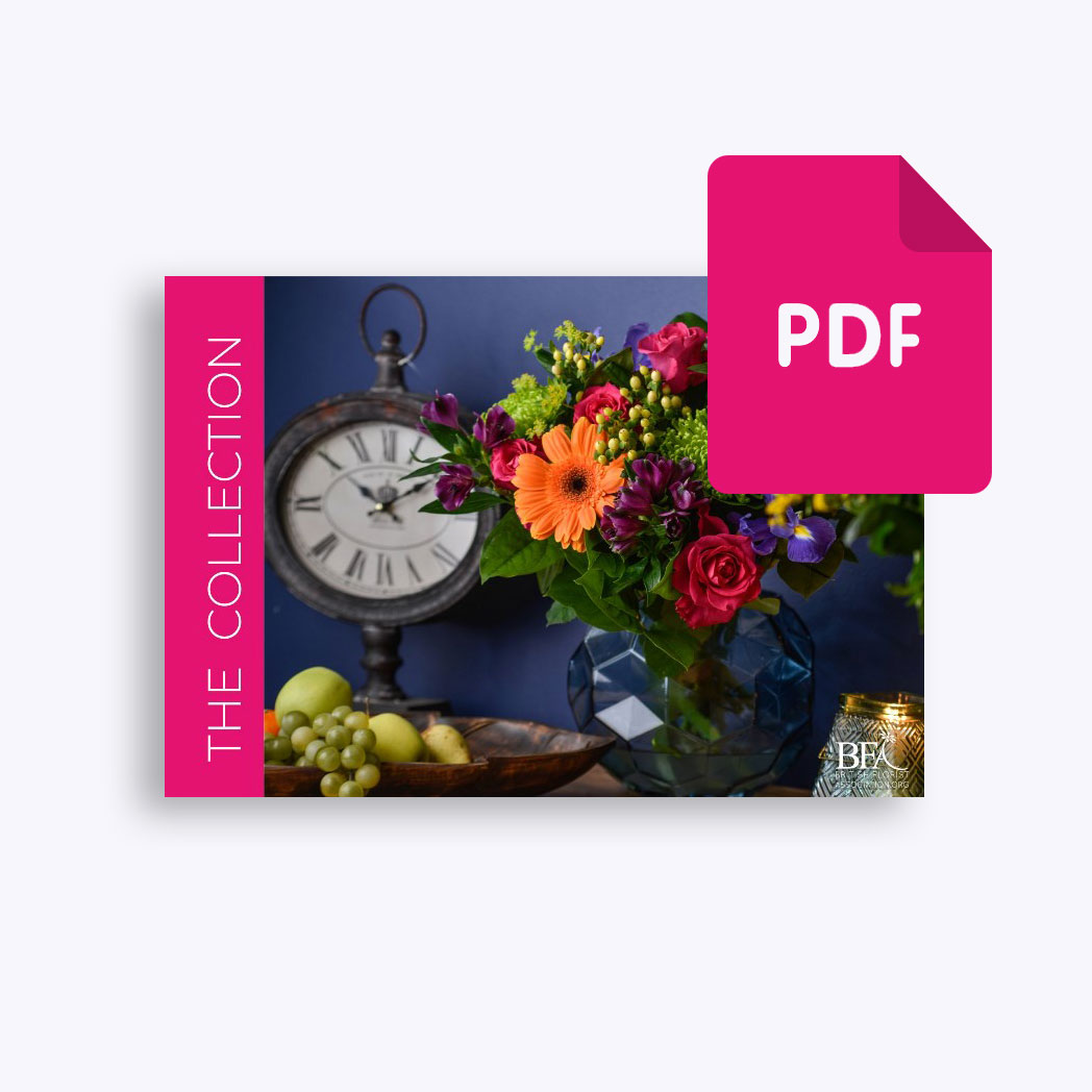 The BFA Collection Digital Version
