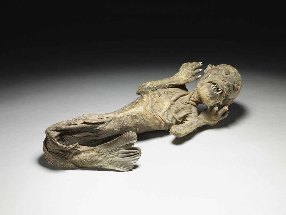 Image result for british museum mummified mermaid