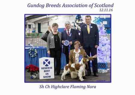 Brittany won Res Best in Show at Gundog breeds of Scotland champ show.