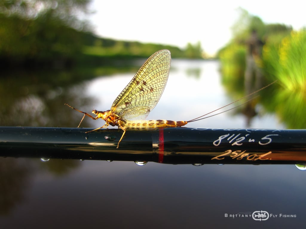 brittany fly fishing