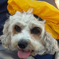 Dog with hat