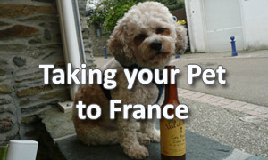Taking your pet to France