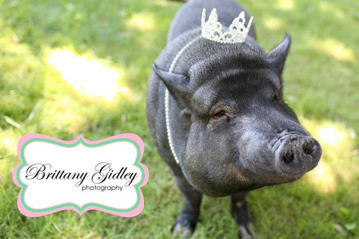 Cleveland Pet Photographer | Brittany Gidley Photography LLC