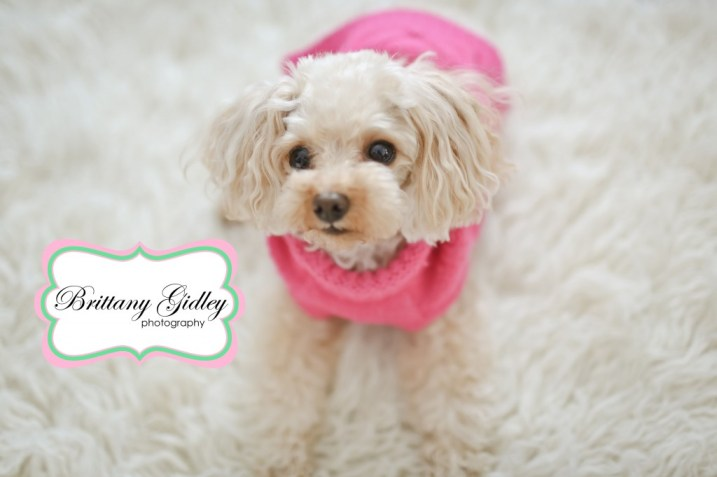 Pet Photography | Brittany Gidley Photography LLC