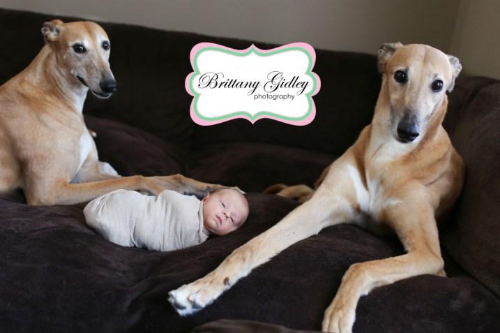 Greyhound Newborn | Brittany Gidley Photography LLC