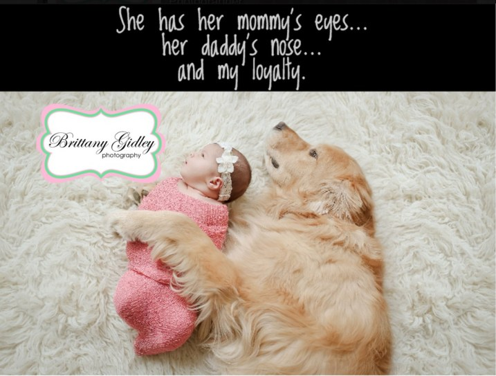 Newborn and Dog | Golden Retriever | Newborn Baby with Dog | Brittany Gidley Photography LLC