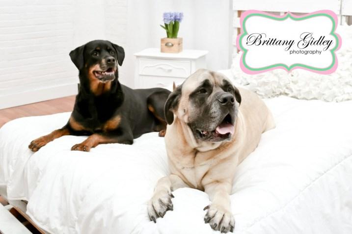 Dog Photography | Brittany Gidley Photography LLC