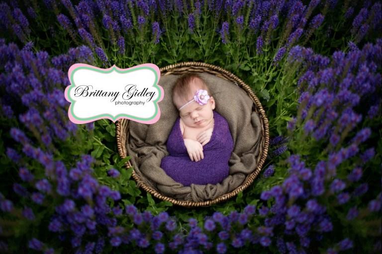 Newborn Baby | Flowers | Purple | Newborn Session | Outdoors | Brittany Gidley Photography LLC