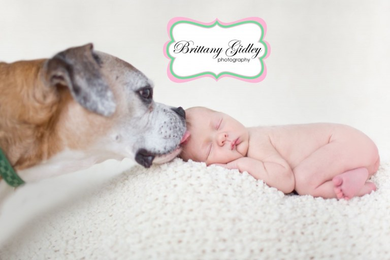 Boxer with Newborn | Dog with Newborn | Pet Photography | Start With The Best | Brittany Gidley Photography LLC