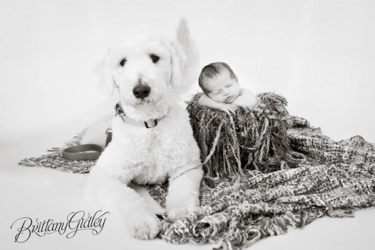 Newborn Studios | Baby Boy | Goldendoodle | Baby and Dog | Newborn and Dog | Photography Cleveland Ohio | Start With The Best | Brittany Gidley Photography LLC