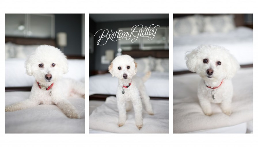 Lifestyle Pet Photographer | Bay Village Ohio | Cleveland |Dogs | Adorable | Family | Pawsibilities Humane Society of Greater Akron | Rescue