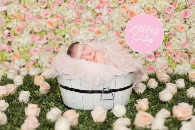 Newborn Photography | Newborn Photographer | Cleveland Newborn Photographer | Fresh Floral | Photo Shoots | Photography Studio | Ohio Photographer | Creative Photography | Newborn Photography Inspiration | Photo Shoot Ideas | Cleveland's Top Photographer | Cleveland's Best Photographer
