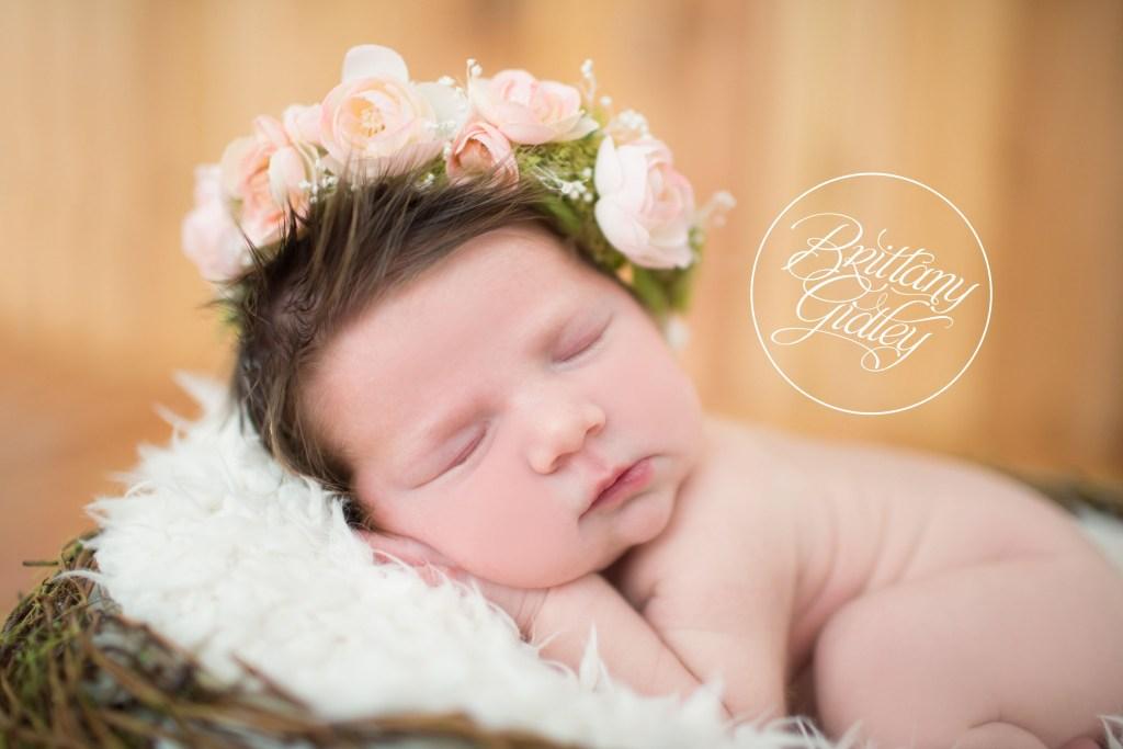 Introducing Parker K | Best Newborn Photographer