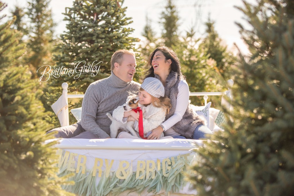 Tree Farm Dream Mini Sessions-17