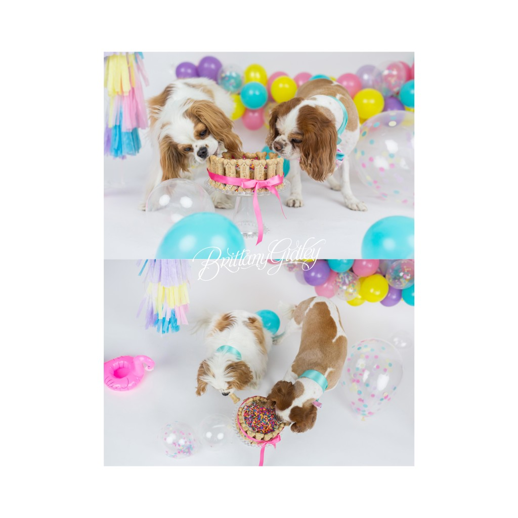 Dog Cake Smash Dog Birthday Party