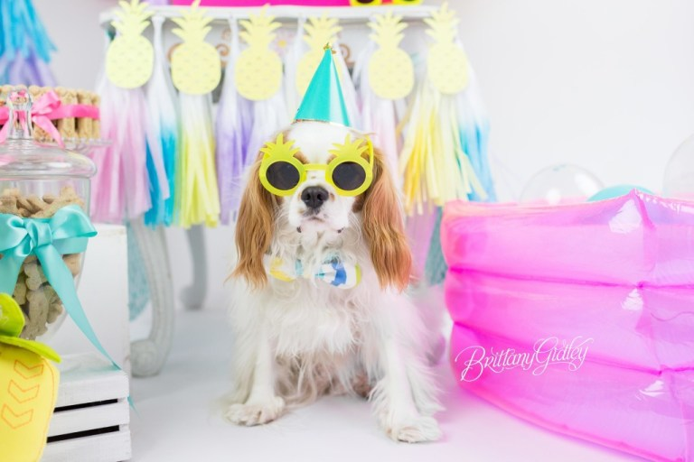Dog Cake Smash | Dog Birthday Party Inspiration | One Stylish Party | Cavalier King Charles Spaniel | Cleveland, Ohio Studio | Start With The Best | Brittany Gidley Photography LLC