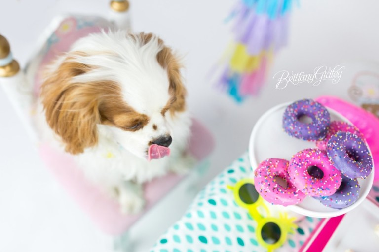 Puppy Cake Smash | Dog Birthday Party Inspiration | One Stylish Party | Cavalier King Charles Spaniel | Cleveland, Ohio Studio | Start With The Best | Brittany Gidley Photography LLC