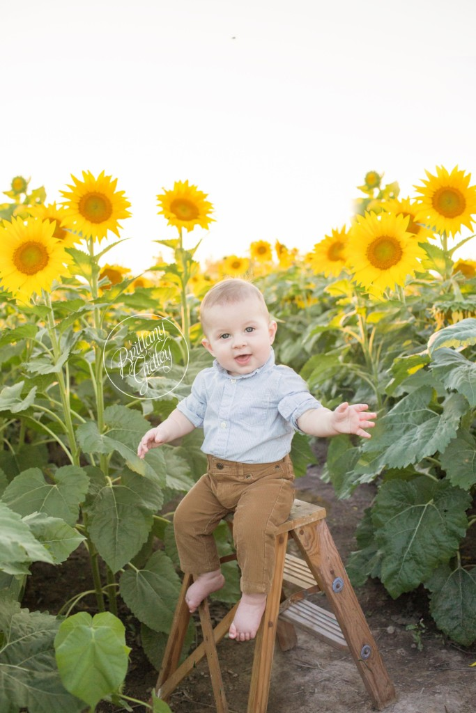 Prayers From Maria Sunflower Field | Henry 9 Months