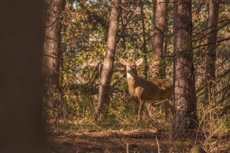 Reindeer | Brittany Gidley Photography LLC