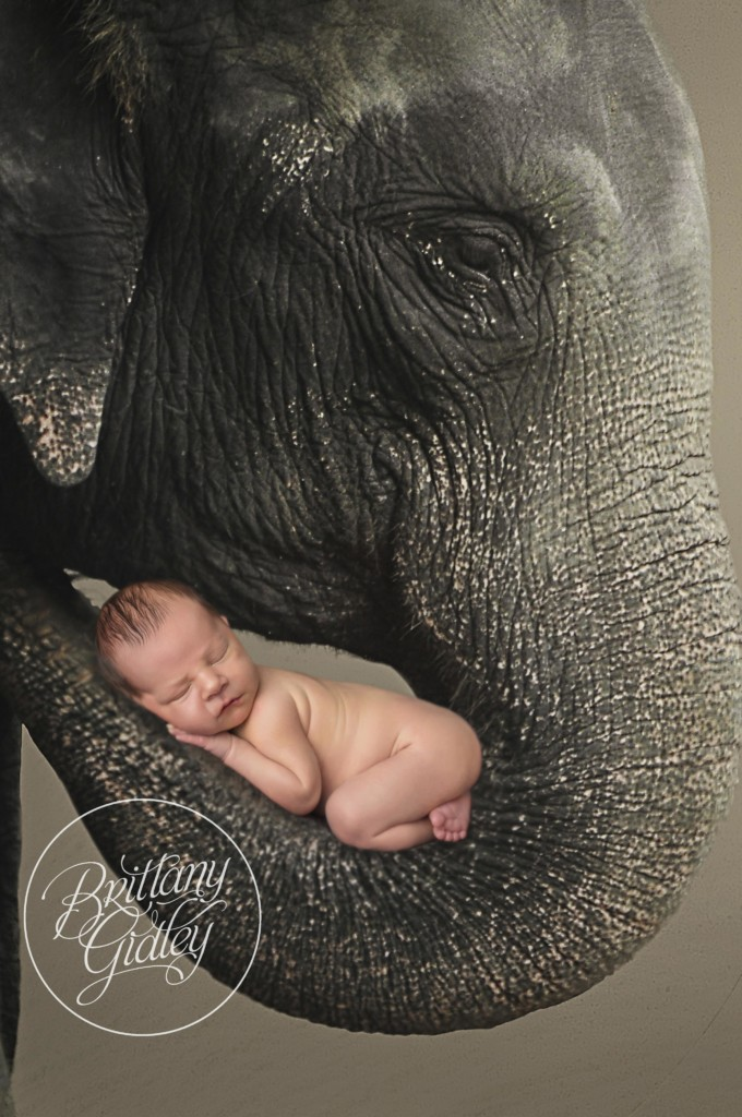Newborn with Elephant | Newborn Composite Information | Start With The Best | Cleveland Ohio Newborn Photographer | www.brittanygidleyphotography.com