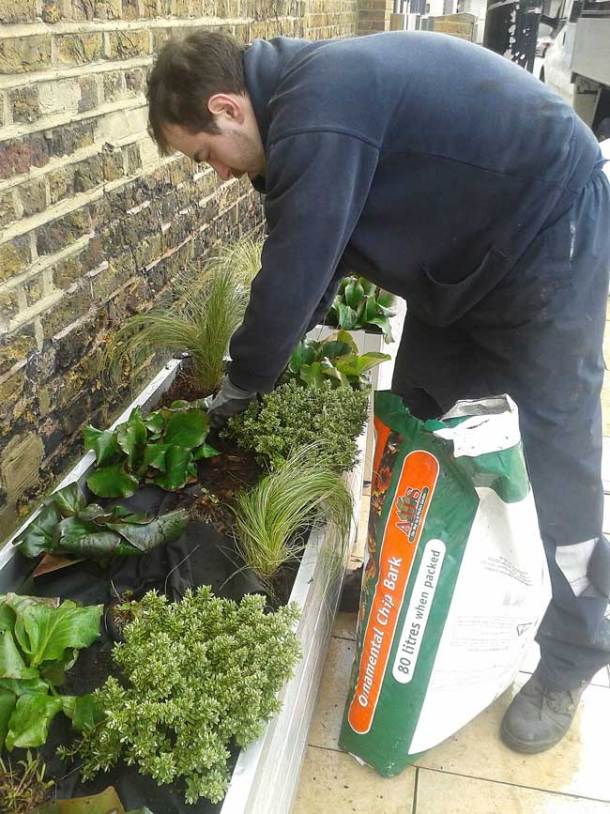 Planting in Windrush Square